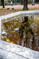 reflexos na fonte foto