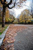 strde com folhas de outono foto