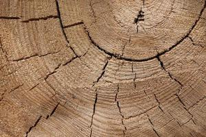 textura de madeira de um tronco de árvore com belos tons dourados. foto