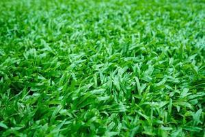 fundo de grama verde, campo de futebol foto