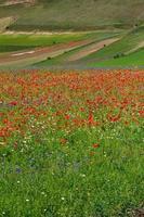 castelluccio di norcia e sua natureza florida foto