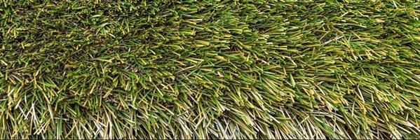 fundo de grama verde primavera foto