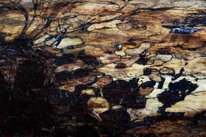 Madeira da casca da árvore da floresta com textura de tronco com pequenos buracos e rachaduras no fundo foto