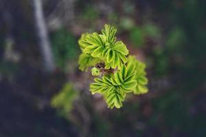 folhas verdes jovens da primavera em fundo escuro foto