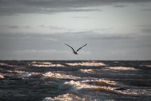 Gaivota larus argentatus voando sobre o mar contra um fundo de céu azul. foto