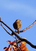 pássaro na natureza foto