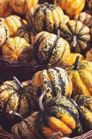 pilha de mini abóboras decorativas e cabaças, no mercado de fazendeiros locais, fundo de outono foto