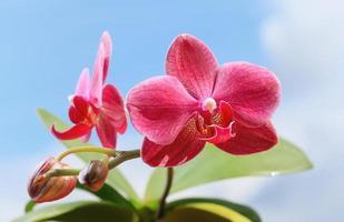 close up de flor de orquídea foto
