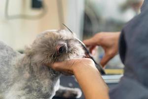 catação de gatos, catador cortando cabelo de gato no salão de beleza para cães e gatos foto