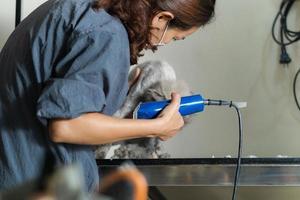 aparador feminino cortando cabelo de gato em um salão de beleza para gatos foto