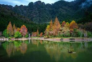 área de recreação da floresta mingchi em yilan, taiwan foto