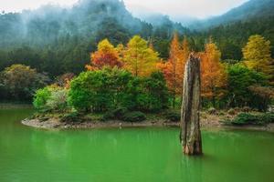 cenário da área de recreação da floresta mingchi em yilan, taiwan foto
