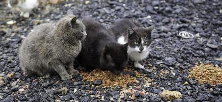gatos comendo na rua foto