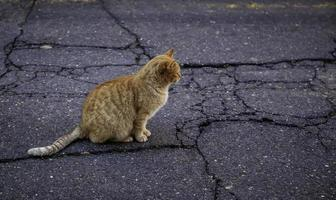 gato de rua na cidade foto