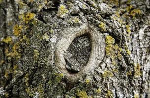 casca de árvore velha foto