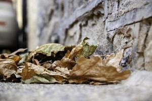 folha seca molhada no chão foto