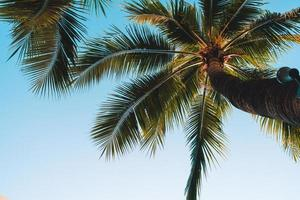 coqueiro com céu vazio e espaço de cópia foto