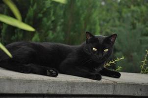 um gato preto sentado em uma pedra foto