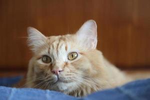 gato jovem fofo foto