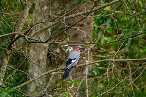 close up de pássaro selvagem foto