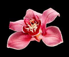 flor de orquídea roxa foto