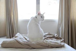 gato branco relaxado foto
