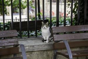 gato solitário e abandonado foto