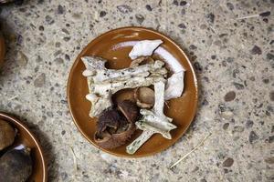 ossos para bruxaria e magia foto