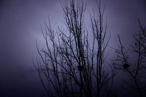 árvore tétrica na floresta foto