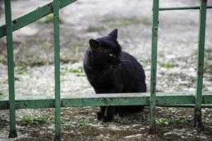 gato preto na rua foto