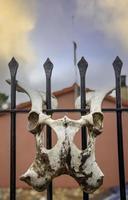 crânio de osso de animal foto