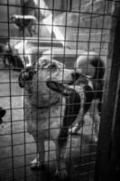 cães do canil trancados foto