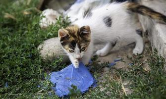 natureza de gatinhos abandonados foto