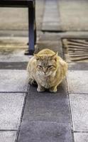 gatos de rua abandonados foto