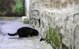 gato preto sem-teto comendo na rua foto