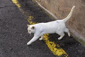 gato de rua abandonado foto