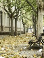 árvores de outono do parque foto