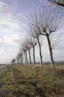 caminho das árvores foto