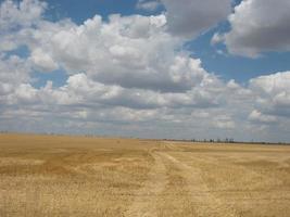 campo amarelo com nuvens foto