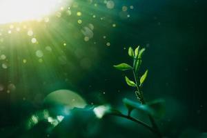 folhas verdes plantas tropicais foto