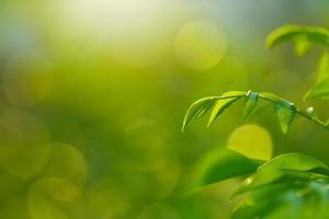 frescor da folha verde foto