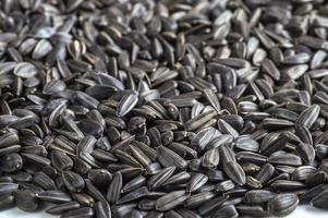 sementes de girassol em fundo branco. helianthus annuus. foto