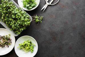 variedade de micro verdes em fundo preto, espaço de cópia, vista superior. foto