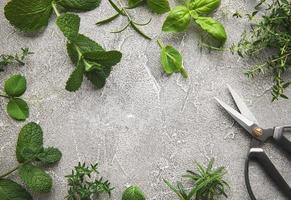 ervas frescas em fundo cinza de concreto foto
