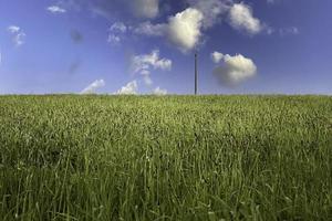 céu e vegetação foto