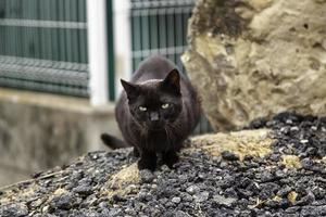 gato preto vadio na cidade foto