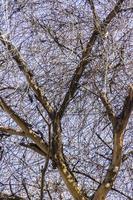 galhos de árvores secos no outono foto