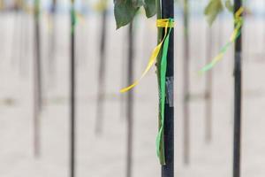 fita verde e amarela na cor da bandeira brasileira, decorando um pedaço de madeira na praia de copacabana no rio de janeiro. foto