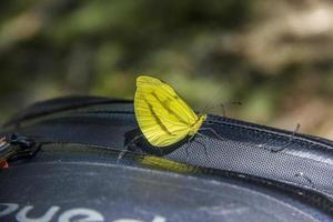 borboletas e insetos foto