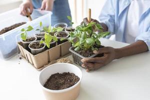 colegas de quarto tendo um jardim sustentável dentro de casa foto
